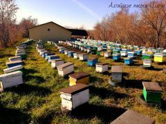 Алтайский мёд разных сортов от семейного пчелохоз-ва