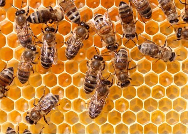Продаю пчелосемьи на высадку