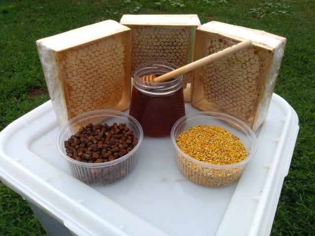 Алтайский Мед высокого качества урожай 2019г