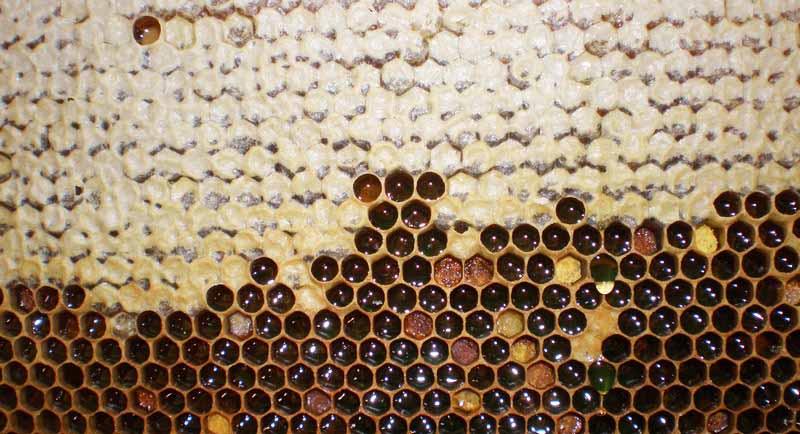 Забрус на пчелинной рамке
