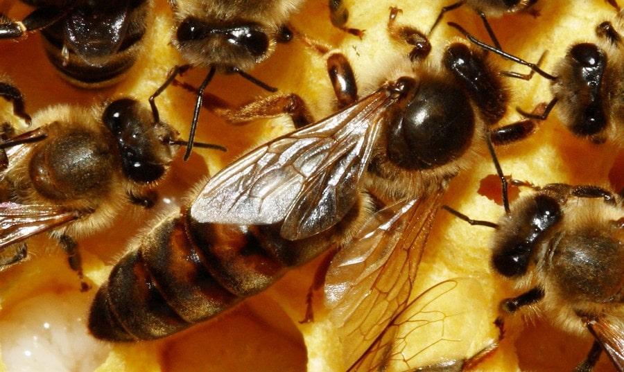Все о подкормках | Пчелы, цветы и здоровье