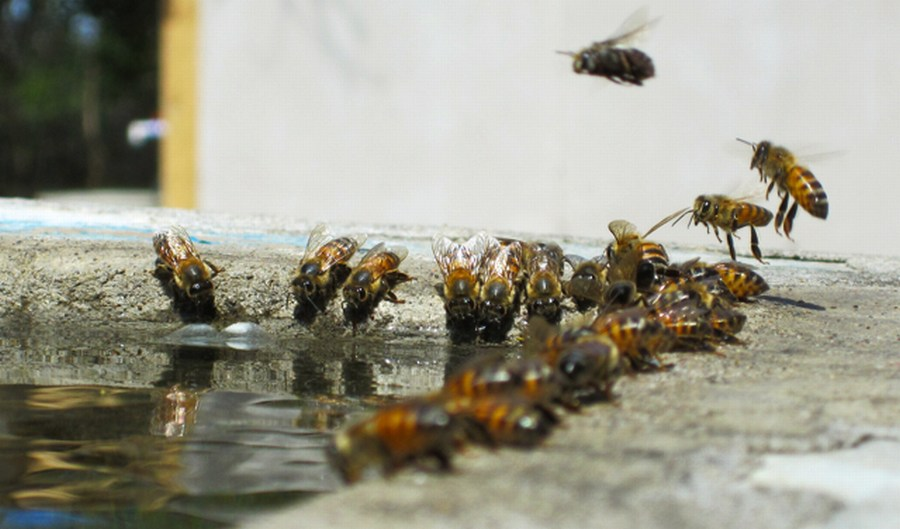 Кормление пчел осенью | Пасека Пчелы Мёд