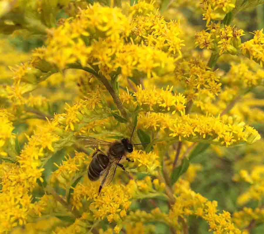 Пчела на полевом цветке