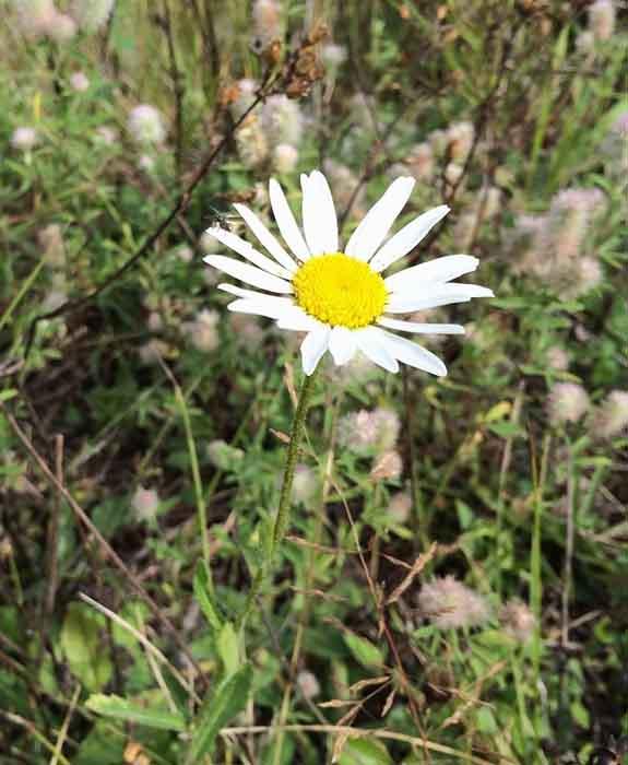 Подкормка пчел осенью | Заметки пчеловода