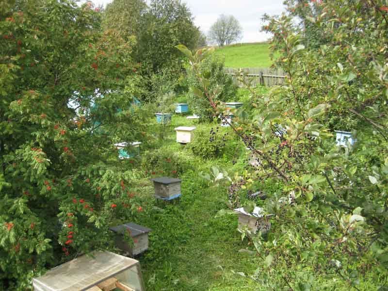 Улья на пчелиной пасеке летом